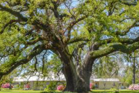 Pointe Coupee Chamber of Commerce - Lifestyle